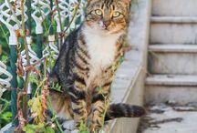 Koty na świecie (4) / o kotach w różnych zakątkach świata