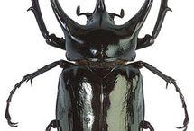 ♥bugs