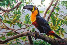 Pinturas...Aves