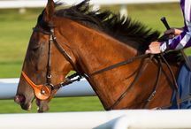 Horse Racing / Horse racing Doncaster