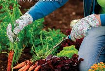The Dirt on Organic Gardening / To succeed at organic home gardening, you need three things: patience, a willingness to get your hands dirty, and THE DIRT ON ORGANIC GARDENING.  Everything the urban organic gardener needs.
