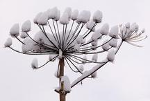 Winter, berries,& frost(2) / by rhonda davis