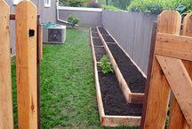 Home gardening inspiration