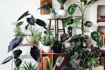 Planter og stell
