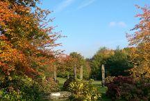 arboretum de la vallée aux loups / toute la beauté d'une journée d'automne ensoleillée