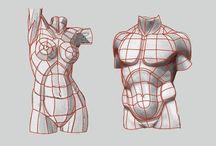 Анатомия, топология