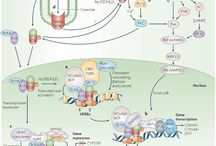 biol pathways