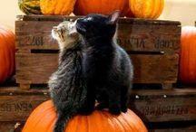 Черные кошки