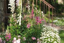 Cottage garden inspirations