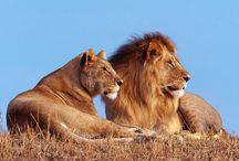 Roar! / The wild ones