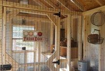 Chicken Coop & Chickens