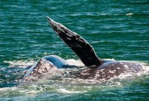 Whales and other wonderful creatures