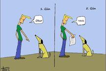 Köpek Eğitim Yeri