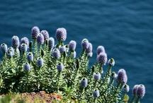 Madeira Island, a floating garden