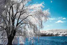 Erdő, tél