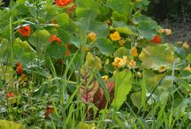 Veg garden ideas / growing veg in a small space.