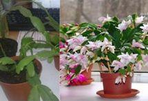 Izbové rastliny