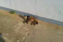 I love cats ♥