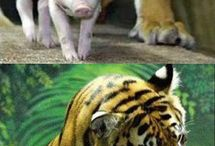 Unlikely friends / All of the unexpected animals that we don't expect could possibly form relationships.