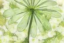 Zeleň zelená, poetická