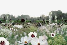 Hvite hager