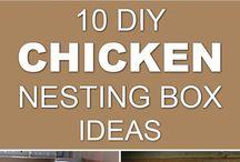 Chickens, chickens, chickens