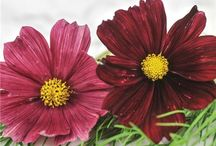 Backyard Bouquets