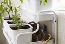 Plant idea