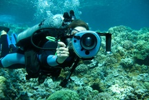La Mer / My love of the ocean runs deep... / by Nonya Bizness