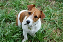 Jack Russells and other pets / by Beth Irvin