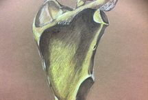 Artistic anatomy / drawings of artistic anatomy which include: osteology and myology