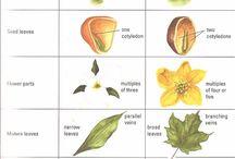 Systém rastlín