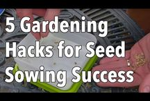 Something Seedy.... / All about seeds, from germination to collection and their storage.