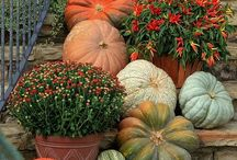 Fall / Fall is an important time for lawns and gardens in Central Ohio. Use these fall tips to make your landscape shine for this fall and in the year to come.