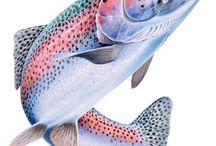 Hal - horgászat