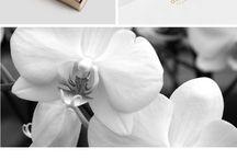 Wild orchid logo