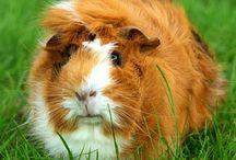 Pig Pig Pig Pig  / by Heidi Smith