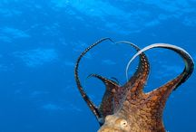 Octi / all about the octopus