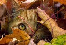 Autumn beautiful Autumn...