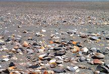 Myrtle Beach! / by Emma Filipkowski