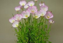 kusamono (accent plant)