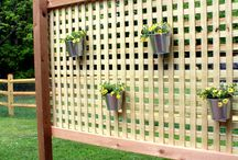 Privacy backyard