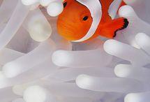 NATURE | Underwater