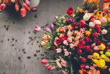 bellas imágenes para mi