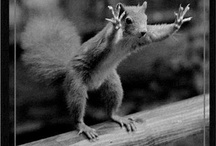 animal pics / by Cary Thompson
