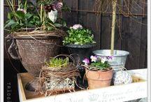 natur - blommor, växter