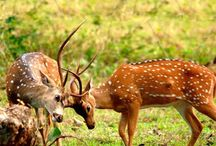 Flora and Fauna of Maharashtra / Sanctuariesindia: Here you can get information about Flora and Fauna of Maharashtra, India.