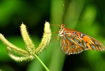 Wildlife: Beautiful butterfly photos / by Yvonne Sherry