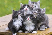 Cat and Kitten Care in Sunrise, FL