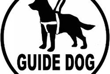 Guide Dogs / by Sylvia Hedberg Thomas